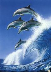 Delfine im Sprung